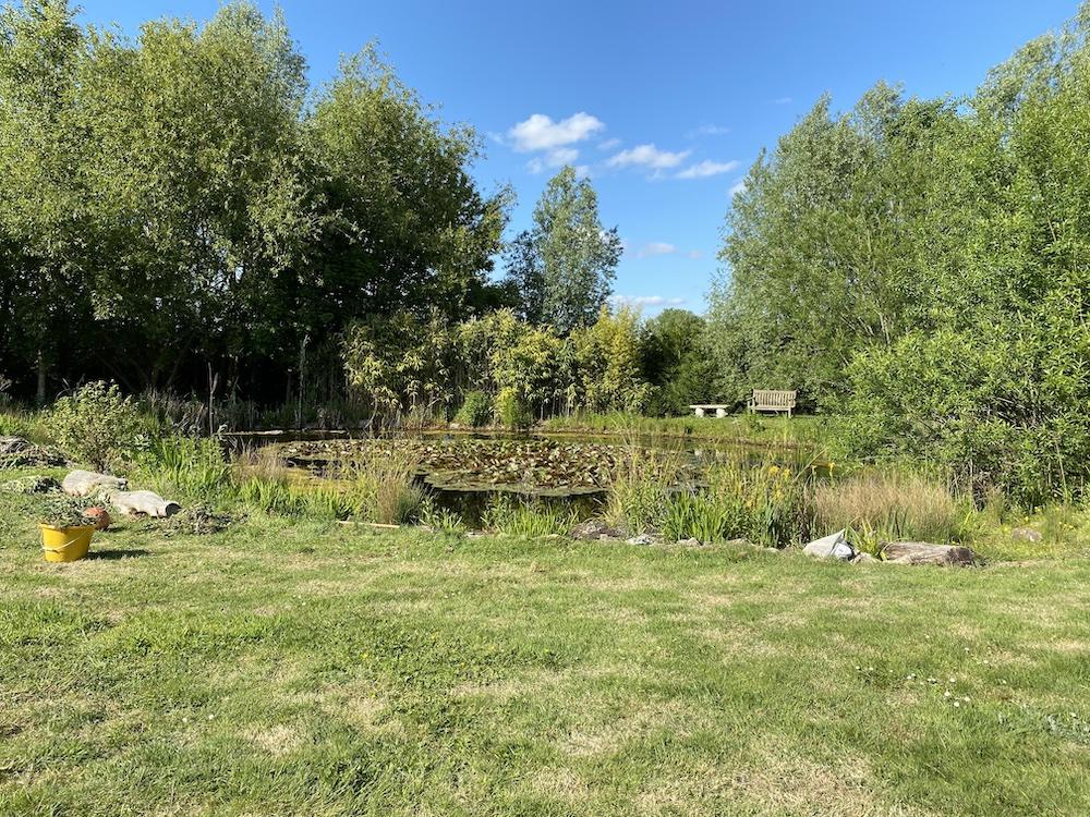 The garden1